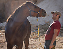 A PIECE OF JORDAN - TRAVEL FEATURE. HORSE GROOMING WITH ANAS TWASSI . PHOTO BY CLARE KENDALL. 07971 477316.