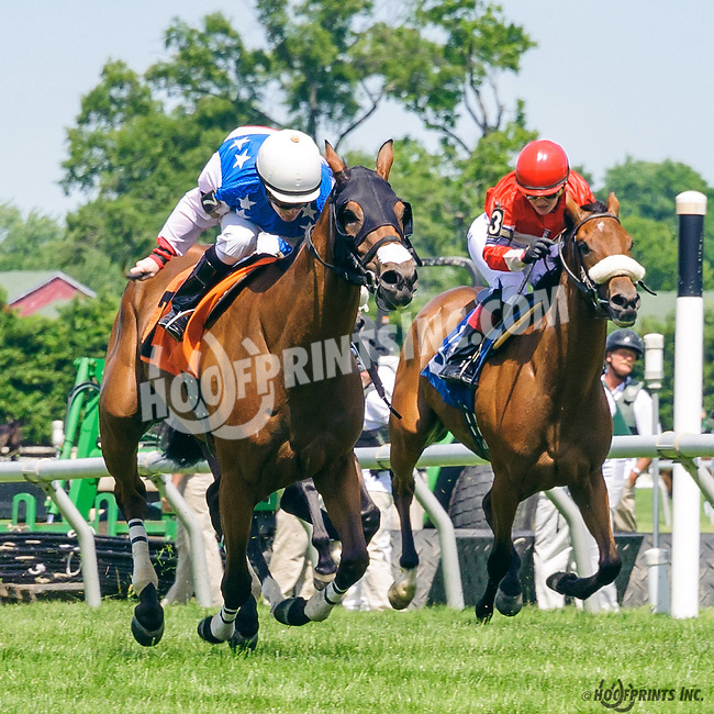 Wilburn's Princess winning The International Ladies FEGENTRI  race at Delaware Park on 6/13/16