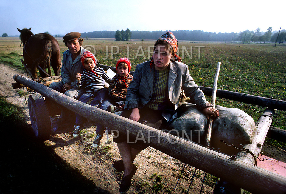 Poland, September, 1981 - A farming family gathers potatoes in the Kolno region. With no advanced farming equipment, work is done by hand and what would be done with tractors is done by horses. The Polish farmers treat their horses very well because they are key to the survival of the farm and the people who work on it.<br /> Pologne, septembre 1981 &ndash; Dans la r&eacute;gion de Kolno, Une famille r&eacute;colte manuellement des pommes de terre, tout le travail est fait &agrave; la main. Les &eacute;quipements m&eacute;caniques agricoles sont rares et les chevaux font la plus part des gros &oelig;uvres. Ils sont aussi tr&egrave;s bien trait&eacute;s par leur propri&eacute;taire.