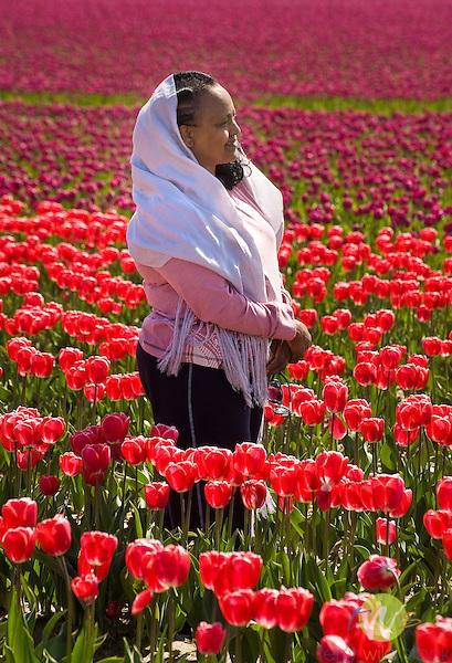 Roozengaarde Tulip Bulb farm, Mount Vernon, WA. Woman standing in tuplis