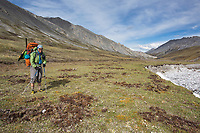 Diggings in the tundra by grizzly bears. Arctic National Wildlife Refuge, Brooks Range, Arctic Alaska.