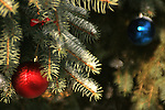 Red and Blue outside Christmas ornaments hanging on an Evergreen tree
