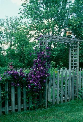 Garden arbor with clematis forms entrance to vegetable garden, Missouri USA
