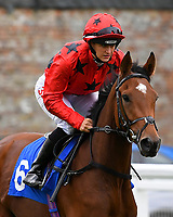 High Seas ridden by Josephine Gordon goes down to the start of the The Byerley Stud EBF Fillies' Novice Stakes   during Bathwick Tyres Reduced Admission Race Day at Salisbury Racecourse on 9th October 2017