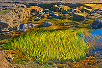 Tide pools at Botanical Beach, Juan de Fuca Provincial Park, British Columbia, Canada