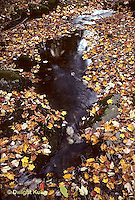 AU13-005c  Autumn leaves along stream