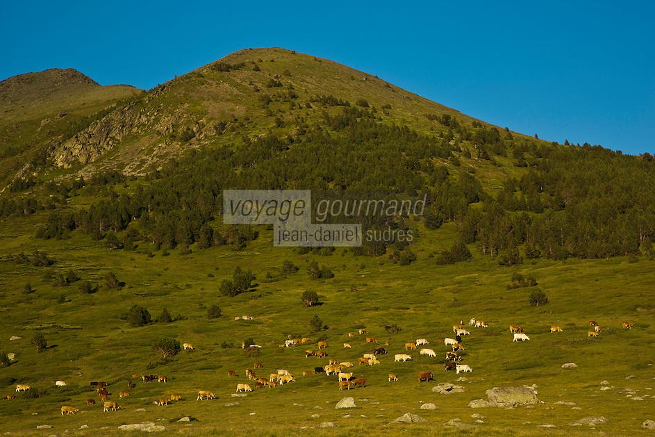 Europe/France/Languedoc-Roussillon/66/Pyrénées-Orientales/Cerdagne: Pâturages au  col de Puymorens , col routier français qui relie les Pyrénées-Orientales à l'Ariège - 1 920 mètres.