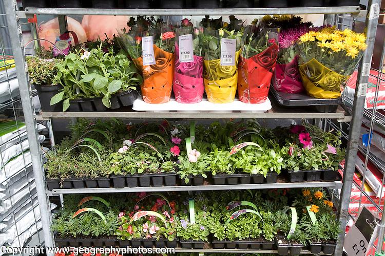 Garden Centre plant nursery, Ladybird Nursery, Gromford, Suffolk, England