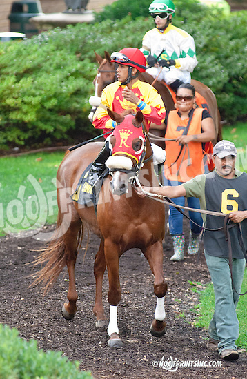 Sand Blastt beforeThe Bob Magness Memorial Arabian Derby (gr 2) at Delaware Park on 9/2/13