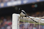 A bird stands on the gate during the La Liga 2018-19 match between FC Barcelona and Real Betis at Camp Nou, on November 11 2018 in Barcelona, Spain. Photo by Vicens Gimenez / Power Sport Images