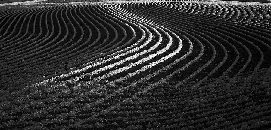 Sunlight hits the rows of crops on a farm field in Nebraska.