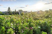 France, Sarthe (72), Le Lude, château et jardins du Lude, le potager, l'orangerie, cosmos et dahlia
