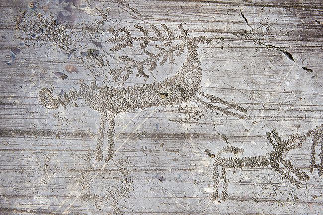 Petroglyph, rock carving, of deer being chased by a dog in a hunting scene Carved by the ancient Camunni people in the iron age between 1000-1600 BC. Rock no 24,  Foppi di Nadro, Riserva Naturale Incisioni Rupestri di Ceto, Cimbergo e Paspardo, Capo di Ponti, Valcamonica (Val Camonica), Lombardy plain, Italy