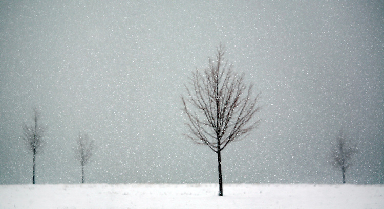 A few saplings stand in the falling snow on Belle Isle in Detroit.