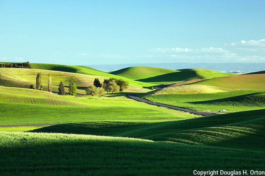 The Palouse Hills, Washington, wheat and lentil fields reaching to the horizon.
