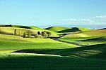 The Palouse Hills, Washington, wheat and lentil fields reaching to the horizon.