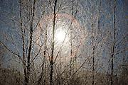 Sun shinning through hardwood forest in Carroll, New Hampshire USA.