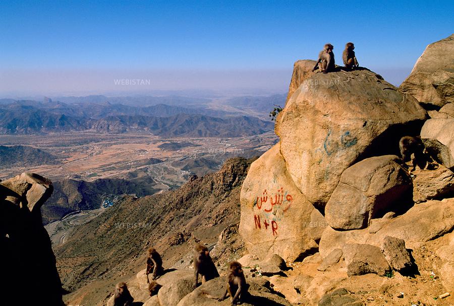 2002. Baboons on rocks. Babouins sur des rochers.