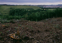 Hobet 21, one of the largest mountaintop removal mines in West Virginia, owned by Arch Coal Company, levels trees to clear where the mine will continue to grow.Land in the background was a mountain and has been reclaimed.