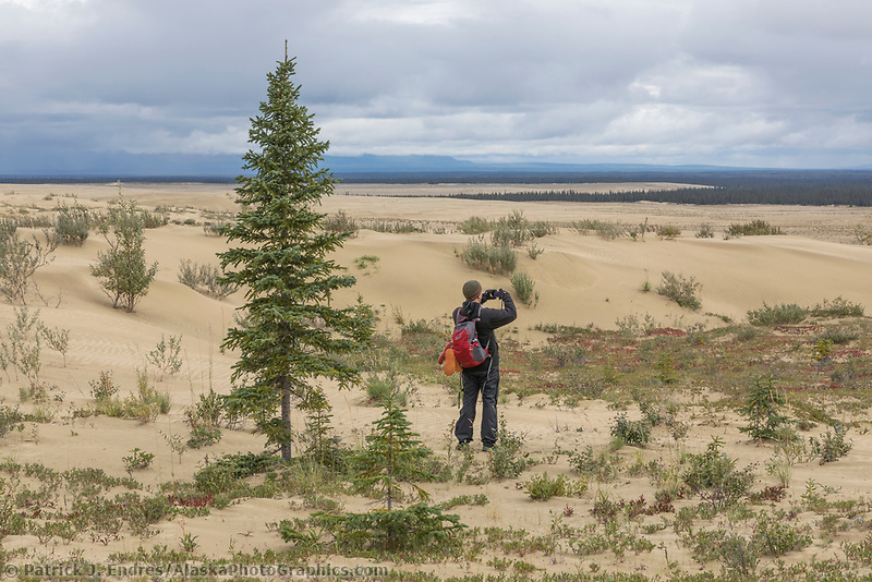 Hiker pauses to take a picture in the Great Kobuk Sand Dunes in the Kobuk Valley National Park, Arctic, Alaska.