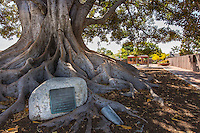 Big Tree Bicentennial Park of Glendora