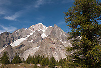Alpine conifers dot the terminal moraine of the Miage Glacier with the Mont Blanc Massif behind.