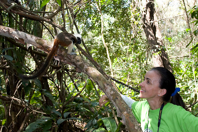 Rosamira Guillen, director of Proyecto Titi, observes a wild Cotton-top tamarin in the dry tropical forest of Colombia.