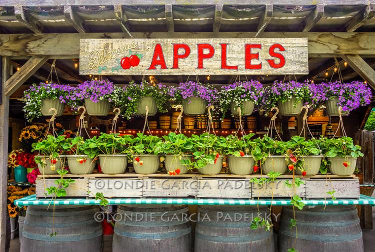 Avila Valley Barn country store and u-pick farm in Avila Valley, San Luis Obispo County, California