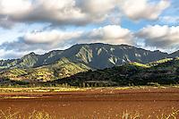 Mt. Ka'ala, Waialua,North Shore, Oahu