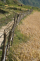 A fence constructed of sticks and vine leads the way up the hill to the Chimi Lakhang Temple in Bhutan. The climb takes the visitor up hills and through farm land dotted with haystacks.