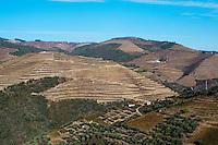 vineyards near vale de mendiz douro portugal