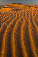 Mojave Desert sand  dune, with wind ripples.