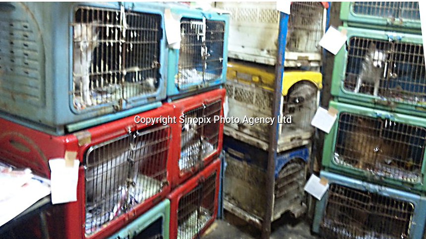 "Conditions in a breeders ""puppy mill"" in Kyushu, Japan show the horrendous conditions that many breeders operate under. Breeders are largely unregulated in Japan...photo by  / Sinopix............"