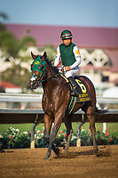 DEL MAR, CA - SEPTEMBER 04: Bolt d'Oro #6, ridden by Corey Nakatani wins the Del Mar Futurity at Del Mar Thoroughbred Club on September 04, 2017 in Del Mar, California.  (Photo by Zoe Metz/Eclipse Sportswire/Getty Images)