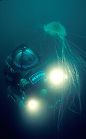 Dr. Bruce Robinson diving a Deep Worker submersible and Egg Yolk Jelly, Carmel Bay, California.