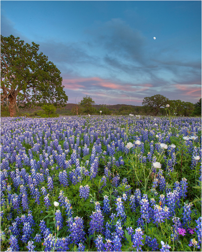 The sunset was to be amazing in over this field of Texas Bluebonnets in San Saba County, but before the light show, I noticed the moon behind me hanging over the ridge.