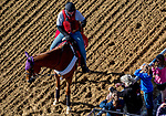 May 15, 2019 : An outrider talks with fans as horses prepare for Preakness Week at Pimlico Race Course in Baltimore, Maryland. Scott Serio/Eclipse Sportswire/CSM