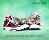 Xavier, ANIMALS, REALISTISCHE TIERE, ANIMALES REALISTICOS, cats, photos+++++,SPCHCATS790,#a#