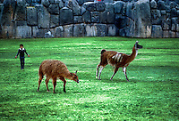 A boy hers his llamas on the grassy plaza of the fortress palace of Sacsayhuaman. Cuzco, Peru.