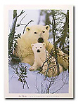 Poster by Bruce McGaw Graphics<br /> Northern Nursery<br /> Paper: 24 x 32 in. (61 x 81 cm.) <br /> Image: 17 x 25.5 in. (43 x 65 cm.) <br /> Perfect for mounting or framing. Watermark does not appear on product.