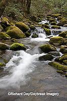 66745-038.20 Roaring Fork in spring, Roaring Fork Motor Trail, Great Smoky Mountain National Park, TN