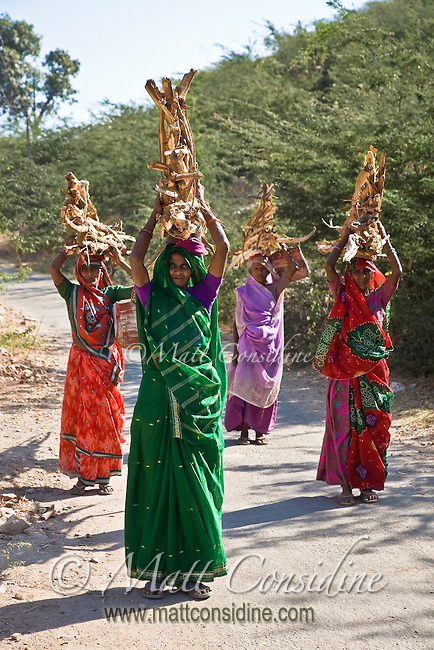 Rajasthani women in colorful saris carry firewood in rural India.<br /> (Photo by Matt Considine - Images of Asia Collection)