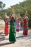 Rajasthani women in colorful saris carry firewood in rural India. (Photo by Matt Considine - Images of Asia Collection)