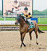 Strong Stipulation winning at Delaware Park racetrack on 6/10/14