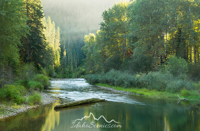 Idaho, North, Coeur d'Alene National Forest. The Little North Fork of the Coeur d'Alene River reflects the evening light of summer.