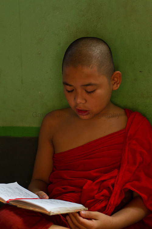 Buddhist young monks studying