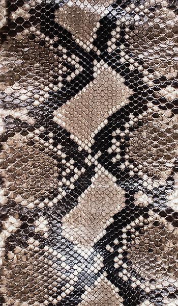 Inspiration for the Python, a hand-cut SeaGlass™ mosaic, shown as part of the Broad Street™ collection for New Ravenna.