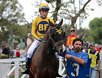ARCADIA, CA: October 06: #3 Mae Never No (Ire) before the Breeders Cup win and you're in Speakeasy Stakes at Santa Anita Park on October 06, 2018 in Arcadia, California (Photo by Chris Crestik/Eclipse Sportswire)