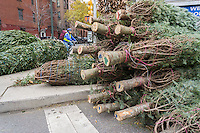 Christmas trees for sale in the New York neighborhood of Chelsea on Wednesday, December 9, 2015. Christmas trees are considered an example of successful recycling where hundreds of thousands are picked up each year and turned into mulch, placed on beaches to help support dunes and are dumped into lakes to create fish habitats.  (© Richard B. Levine)