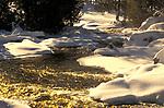 Golden Light on River & Snow, Ontario, Canada